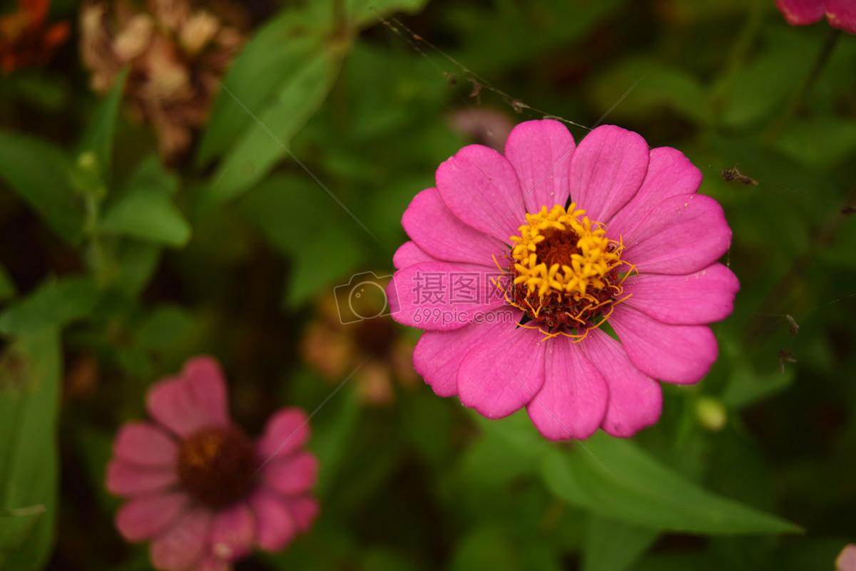 紫色花朵图片