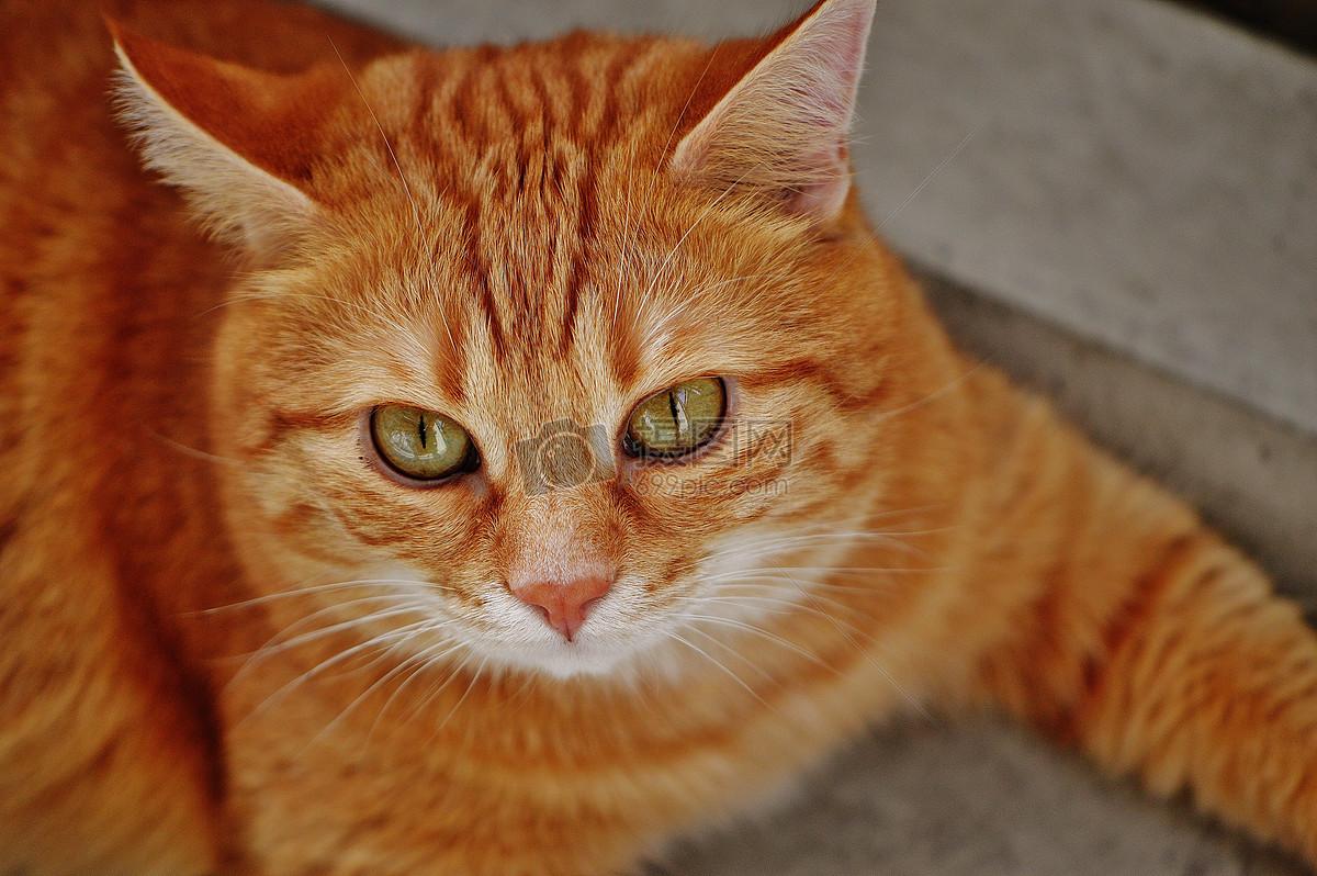 图片 照片 自然风景 棕色的小猫.jpg