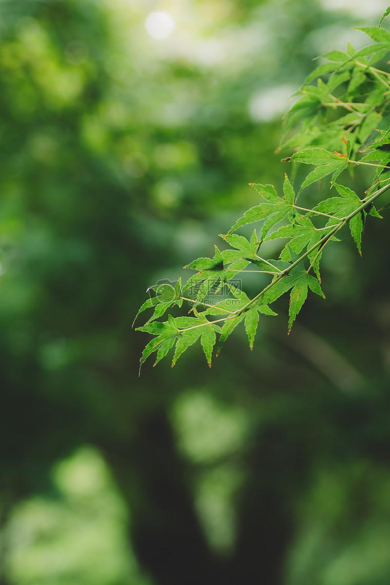 照片 自然风景 叶子背景虚化绿色环境清新jpg