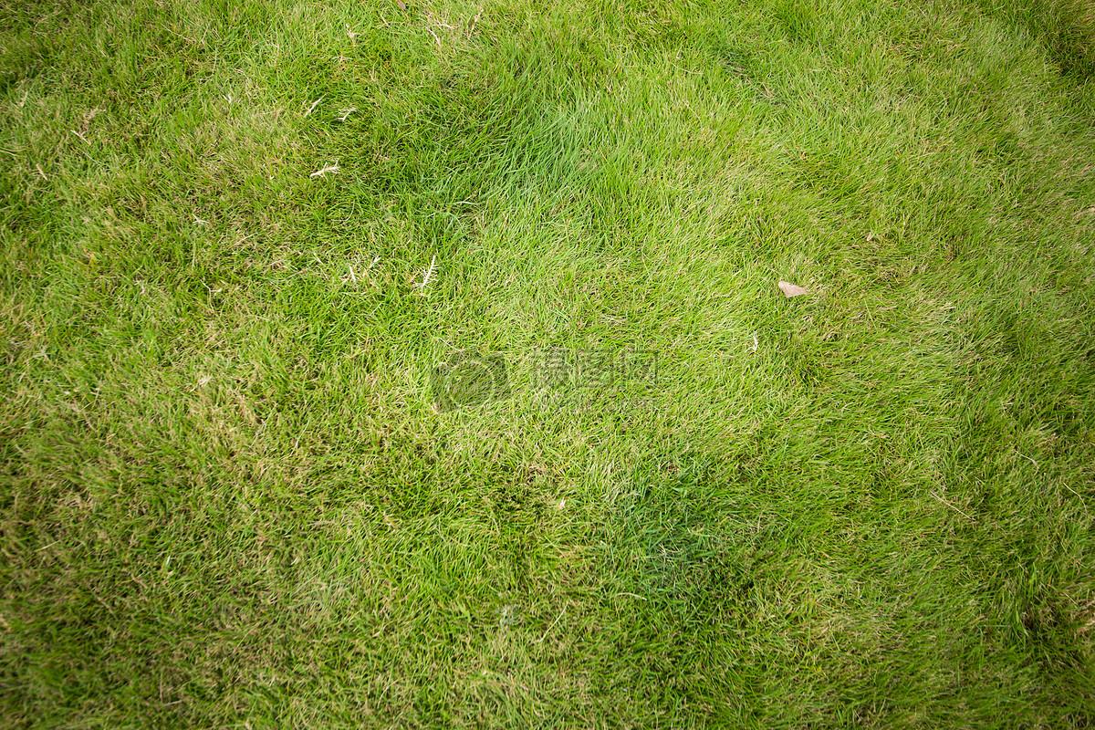 图片 照片 自然风景 绿色草地背景.jpg