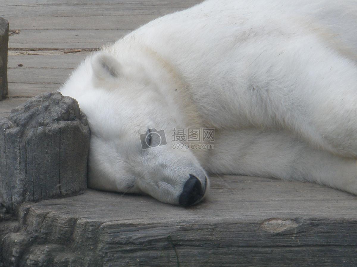 动物躺着吃东西gif