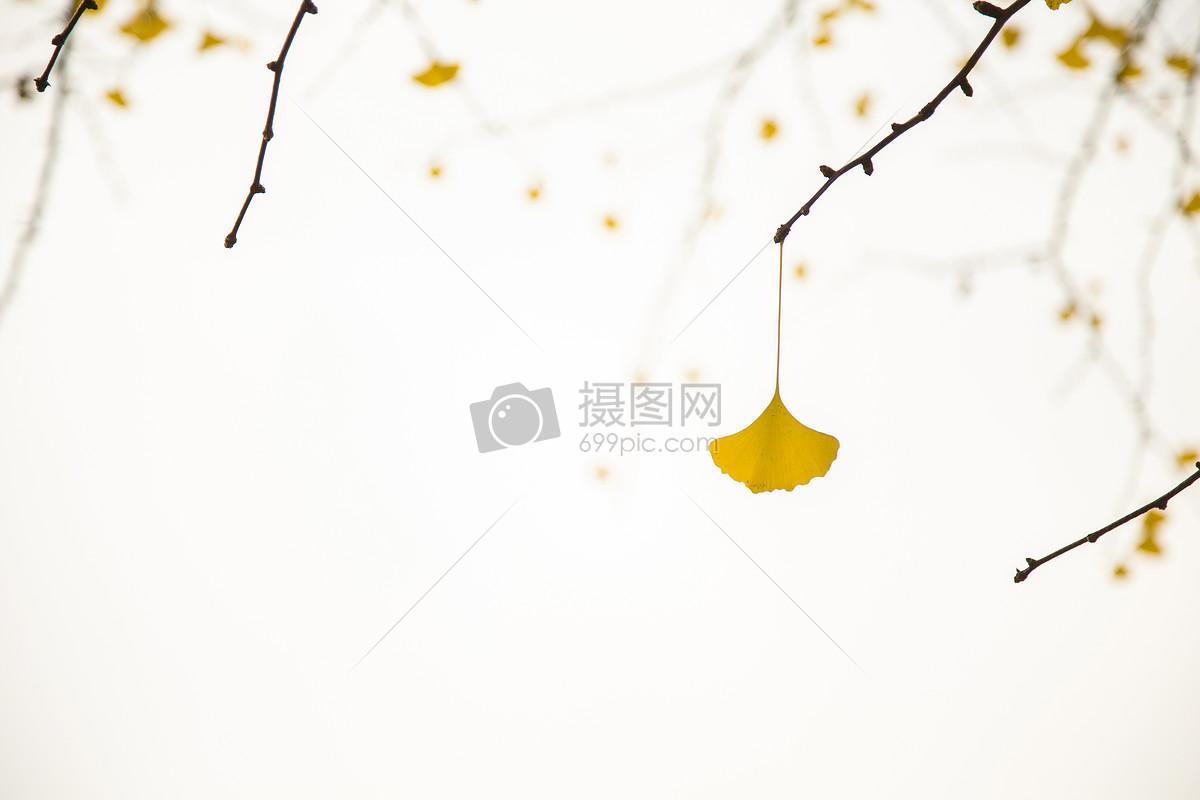 立秋节气秋意银杏图片
