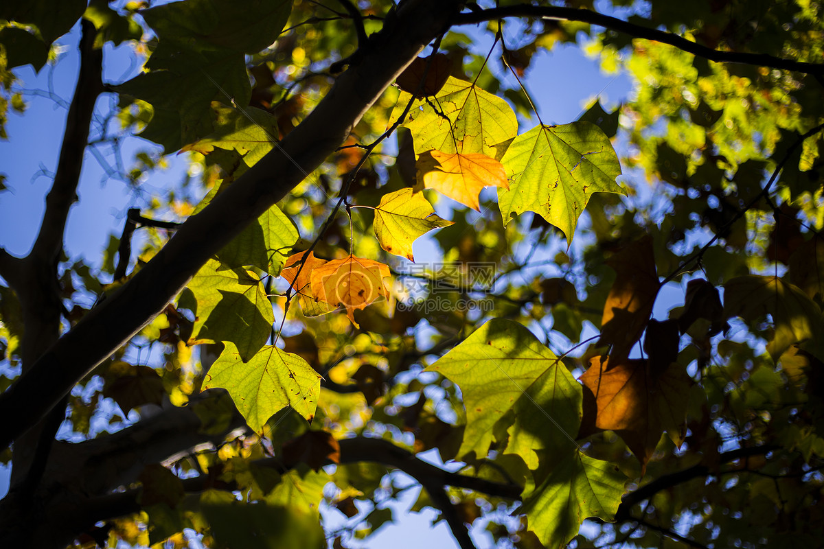 秋色的树图片