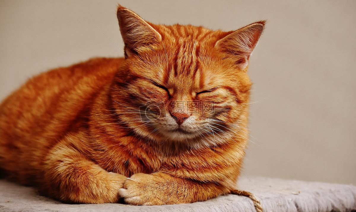 闭着眼睛的猫咪