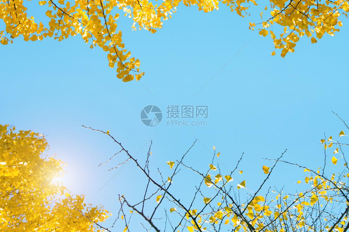 秋天的金色胡杨林图片