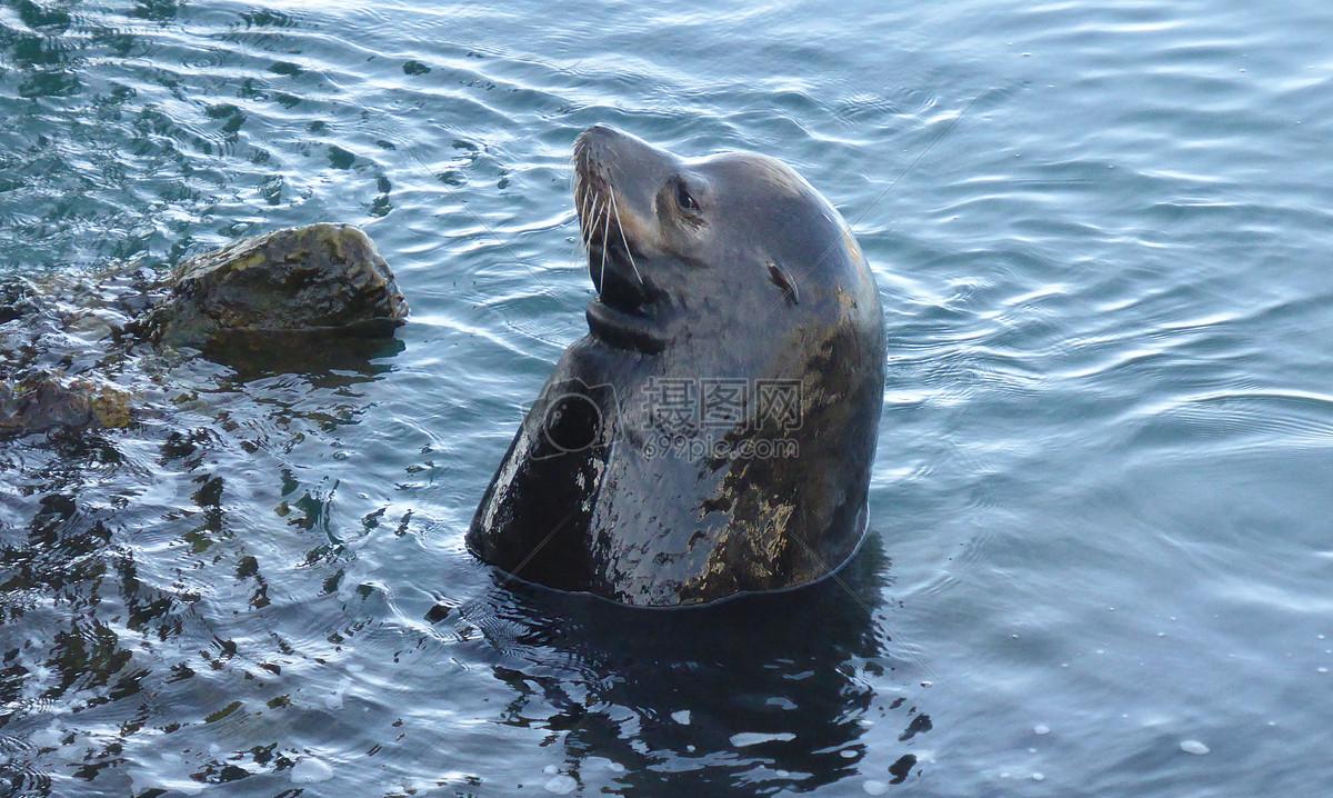 在水里的动物