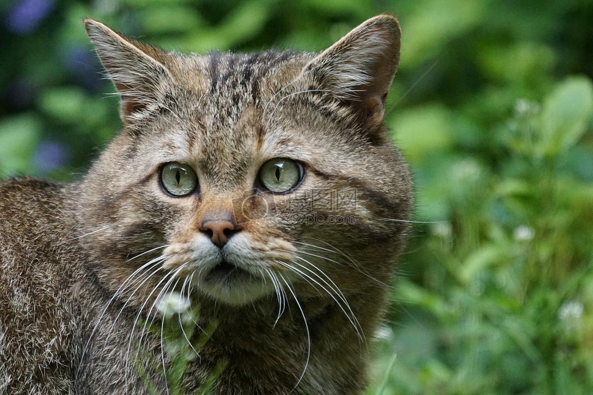 图片 照片 自然风景 看望远方的猫咪.jpg
