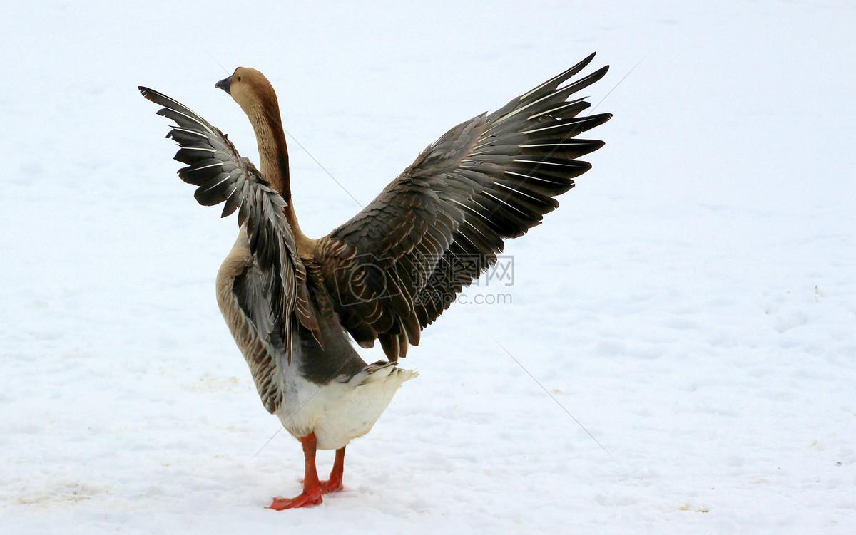 图片 照片 自然风景 展开翅膀的鸟.jpg