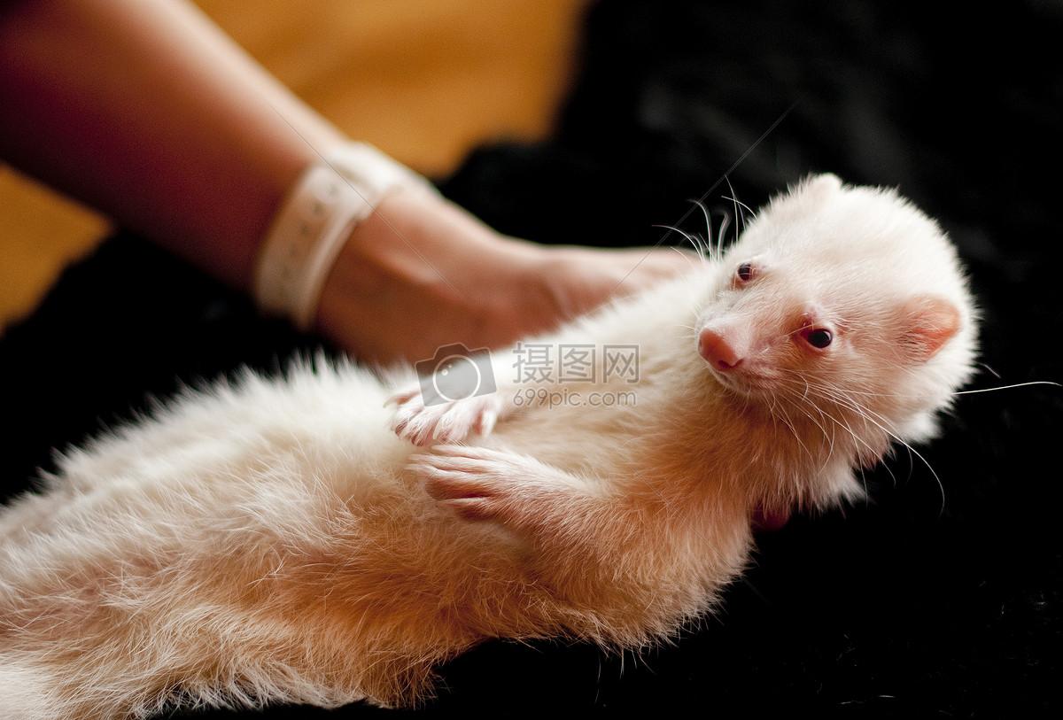 可爱的动物摄影图片照片免费下载,正版图片编号,搜索