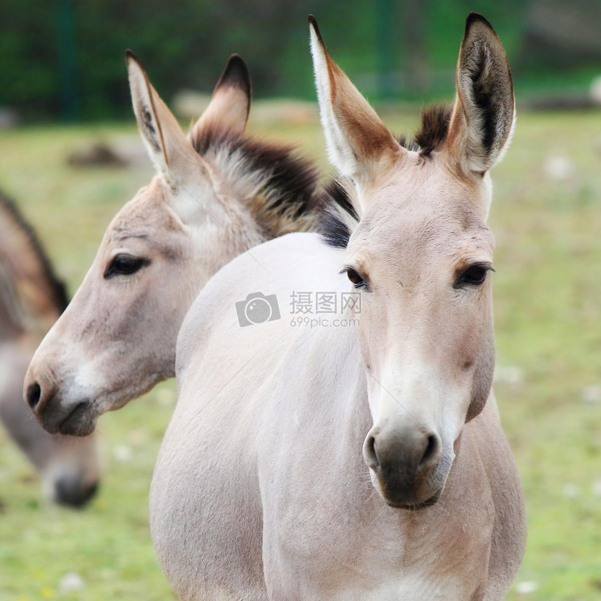 站着的动物摄影图片照片免费下载,正版图片编号,搜索
