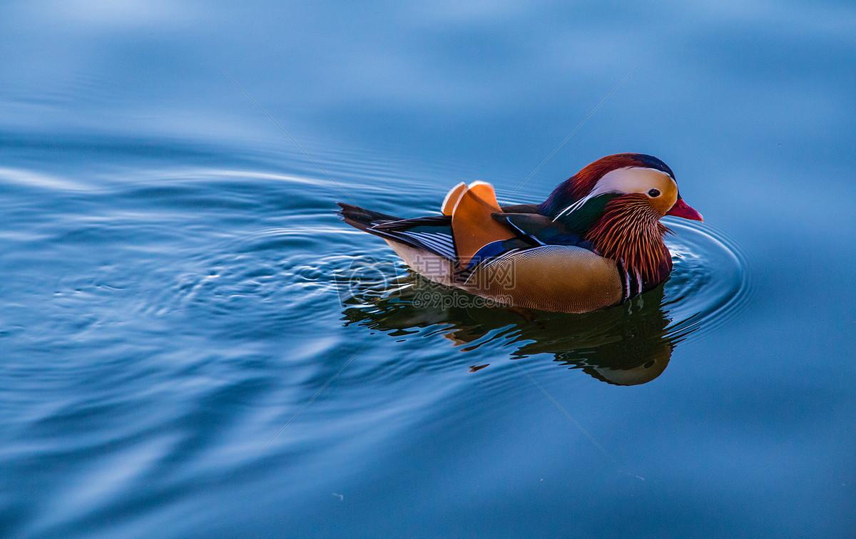 北海小动物摄影图片素材免费下载_动物图库壁纸大全
