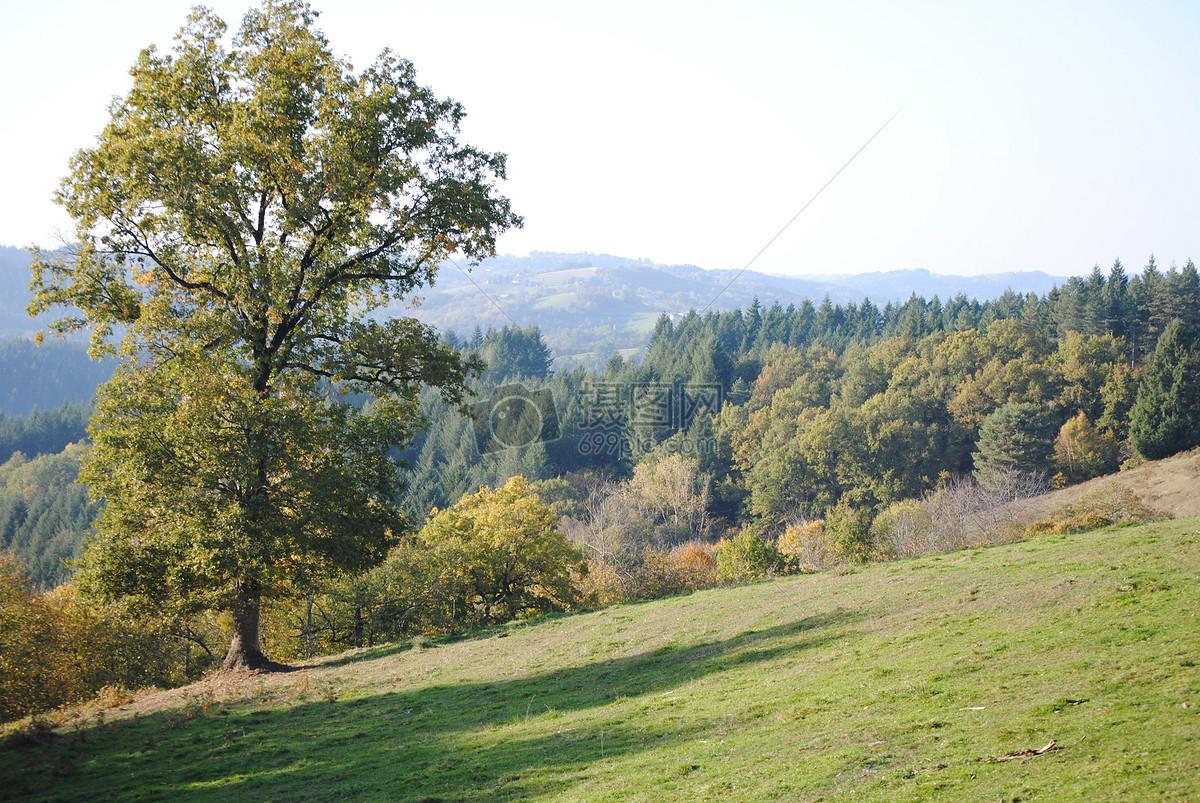 图片 照片 自然风景 山坡上的树木.jpg