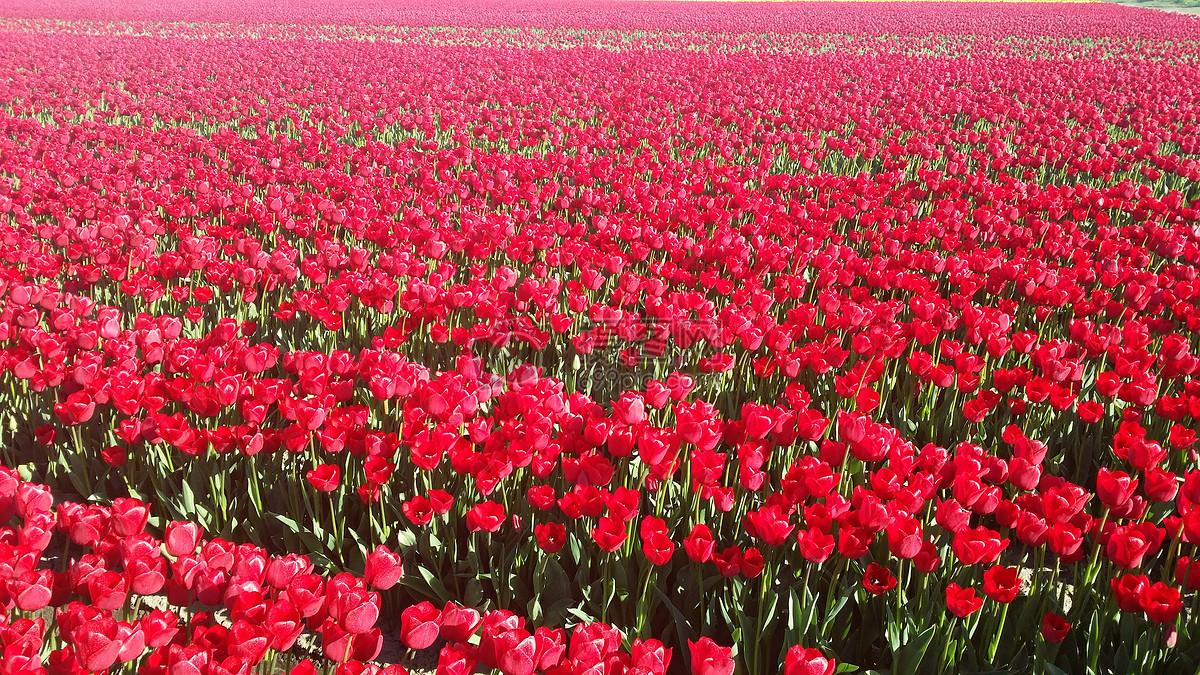 图片 照片 自然风景 盛开的鲜花.jpg