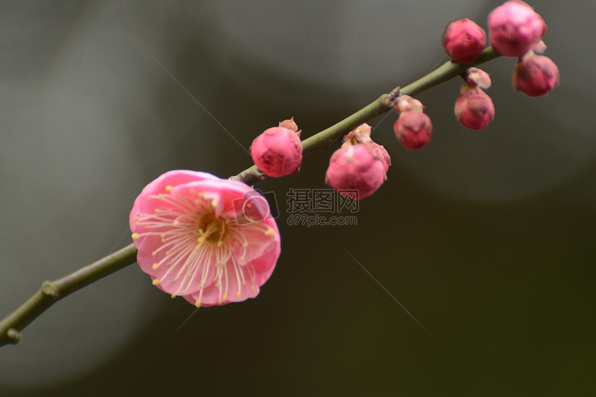 图片 照片 自然风景 红梅花儿开jpg  分享: qq好友 微信朋友圈 qq空间