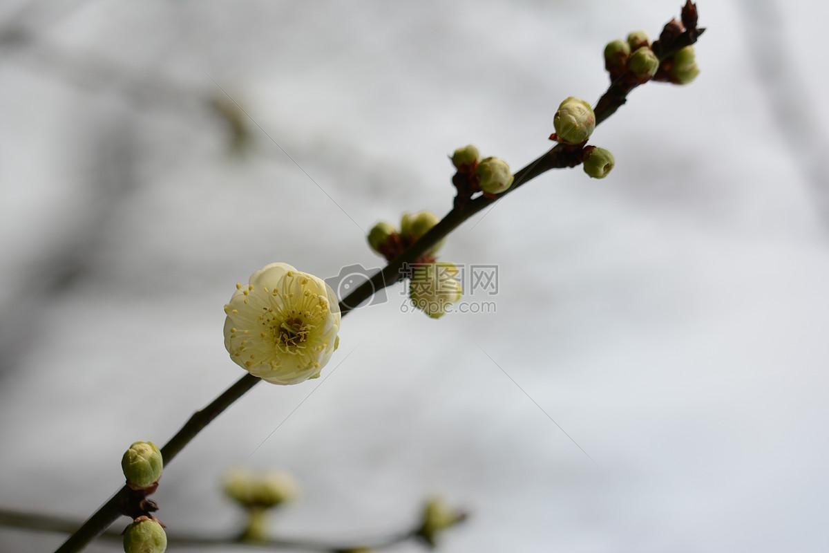 唯美图片 自然风景 红梅花儿开jpg  分享: qq好友 微信朋友圈 qq空间