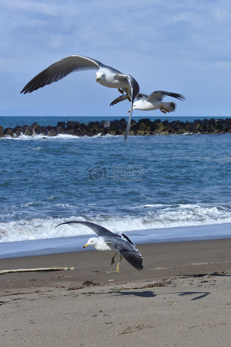 海边的海鸥摄影图片免费下载_动物图库大全_编号-摄