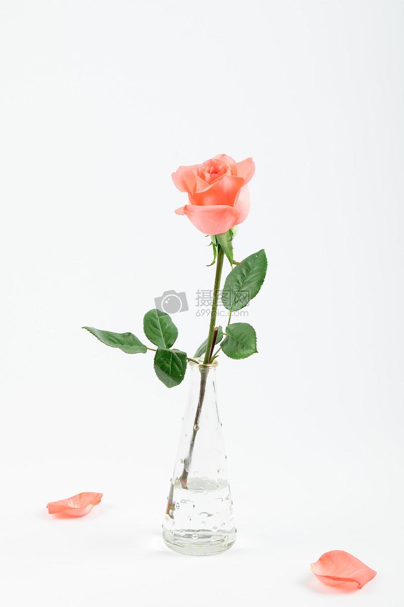愛情玫瑰花花瓣插花背景