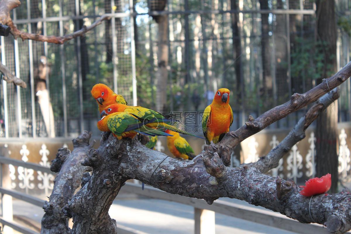 动物园的鹦鹉摄影图片免费下载_动物图库大全_编号-摄