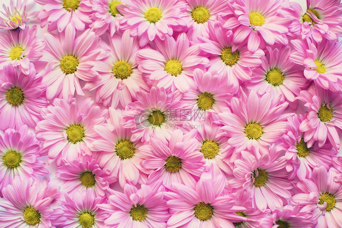 照片 自然风景 粉色雏菊jpg