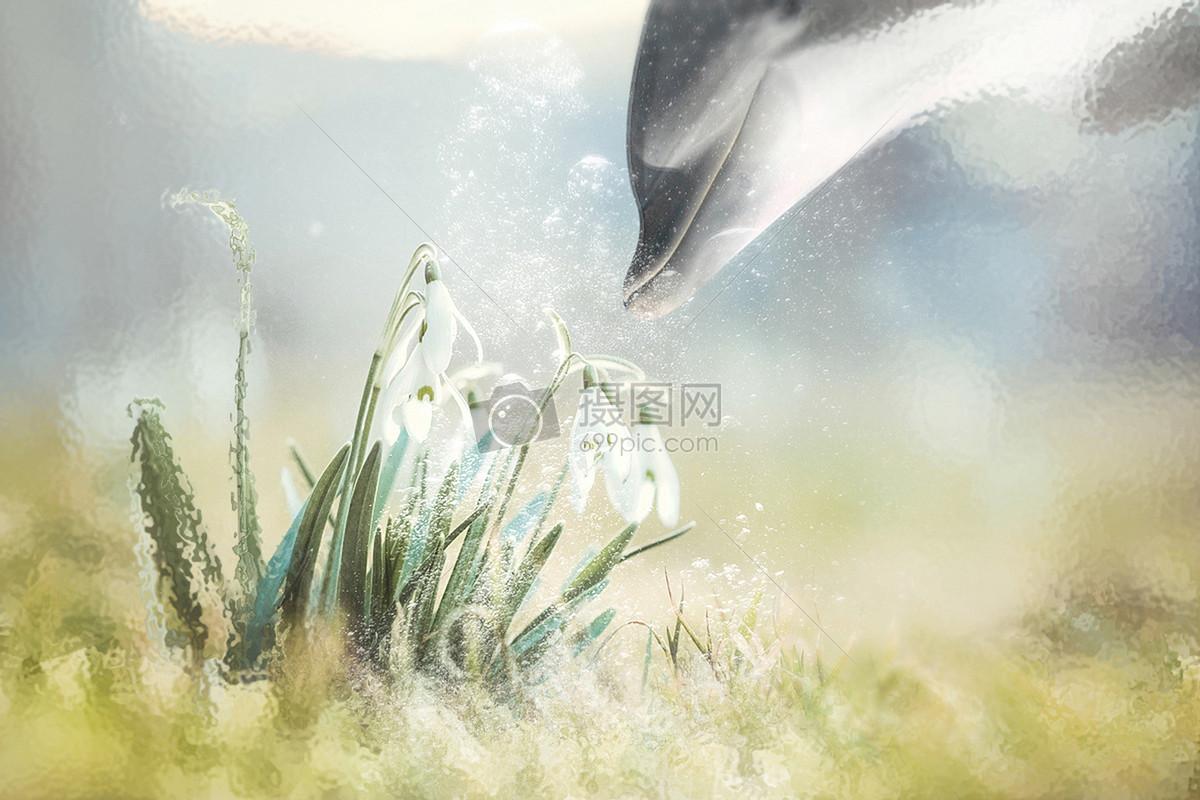 梦幻海豚摄影图片免费下载_动物图库大全_编号-摄