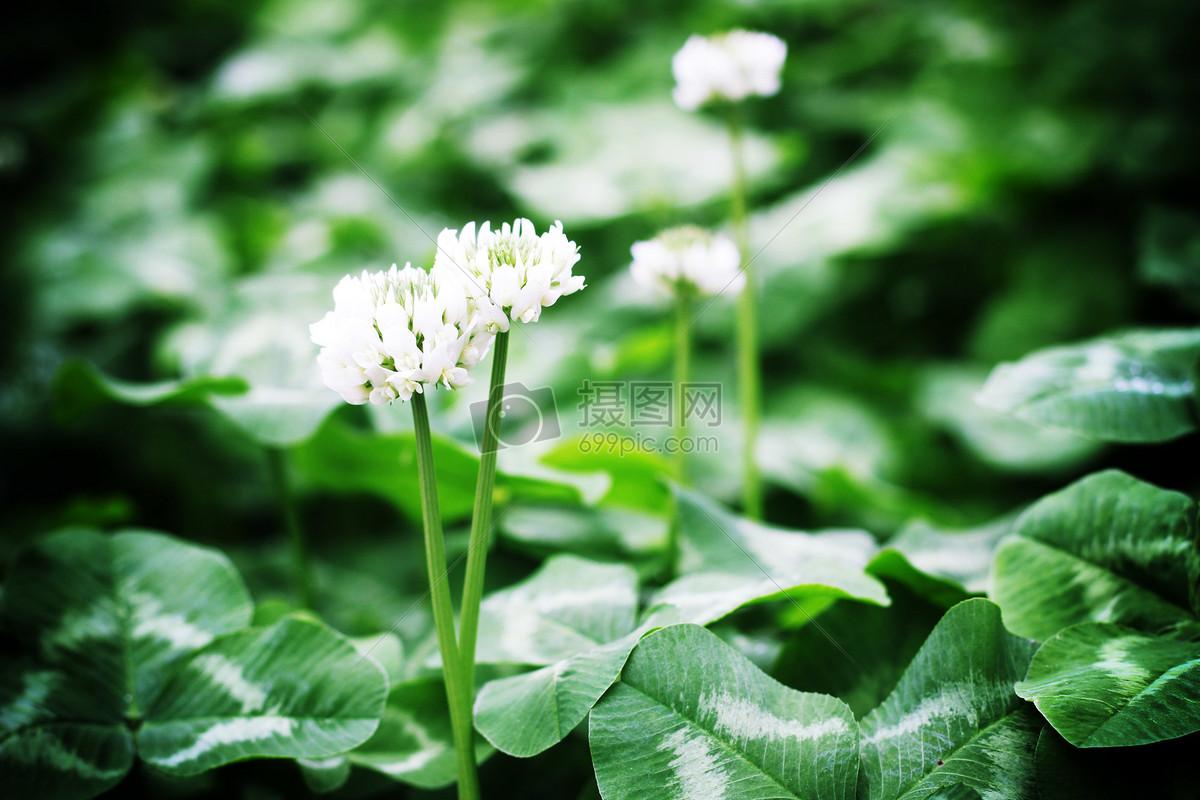 图片 照片 自然风景 春光下的花草.jpg