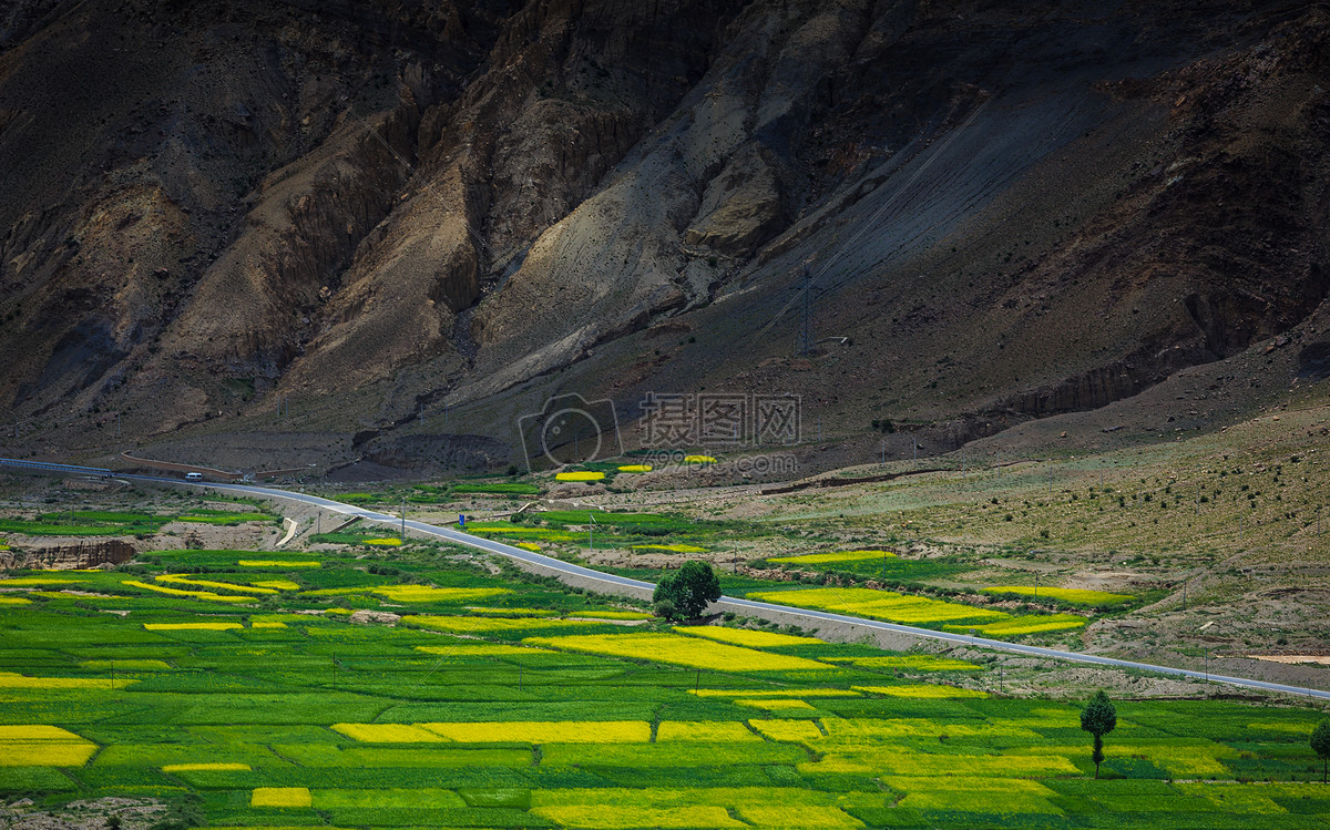 照片 自然风景 西藏山脉山脚下的麦田jpg