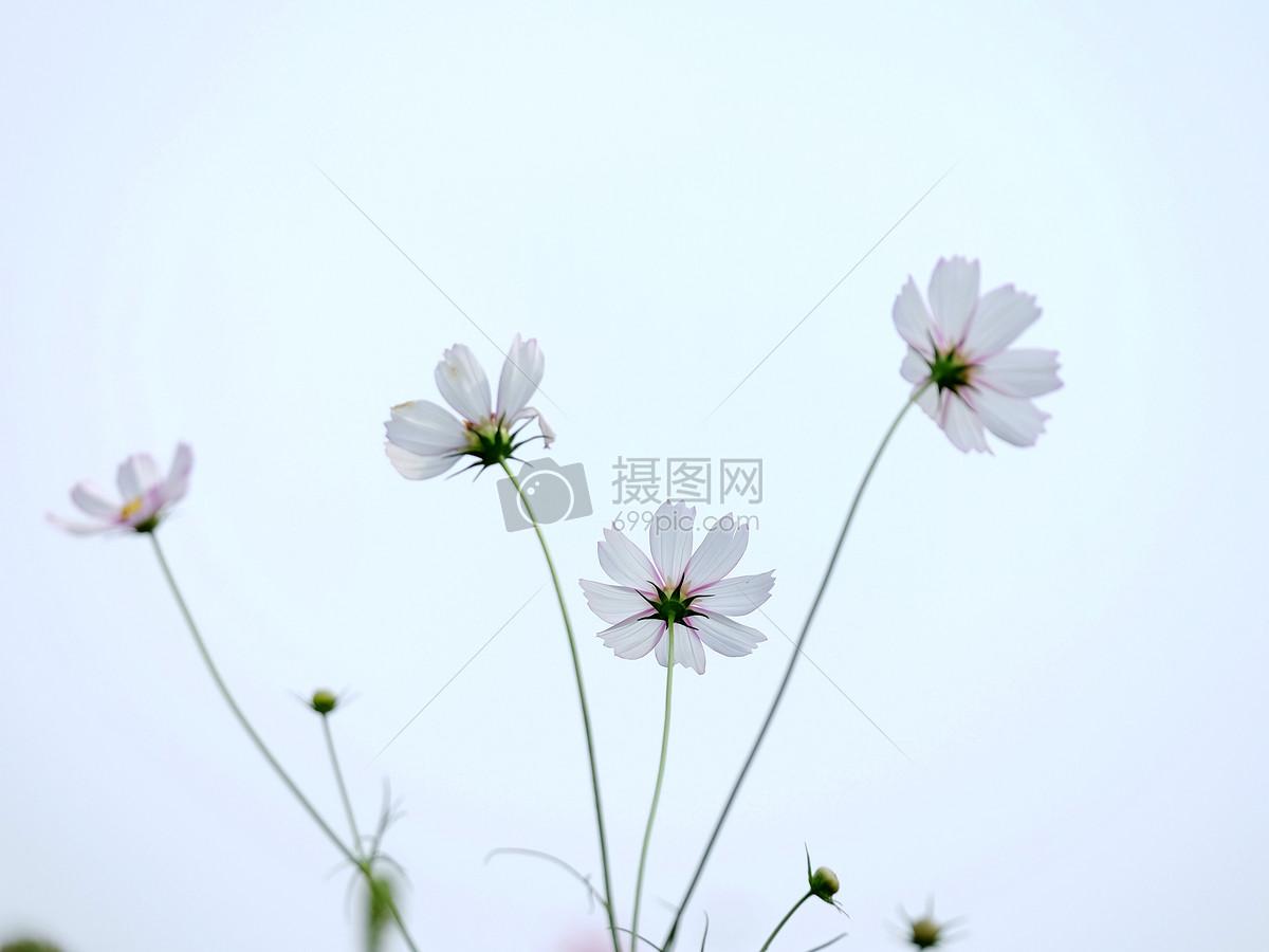 花朵摄影图片免费下载_自然/风景图库大全_编号-摄