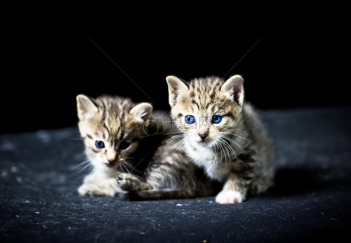 标签: 猫咪胖萌猫毛茸茸小猫小猫咪慵懒可爱