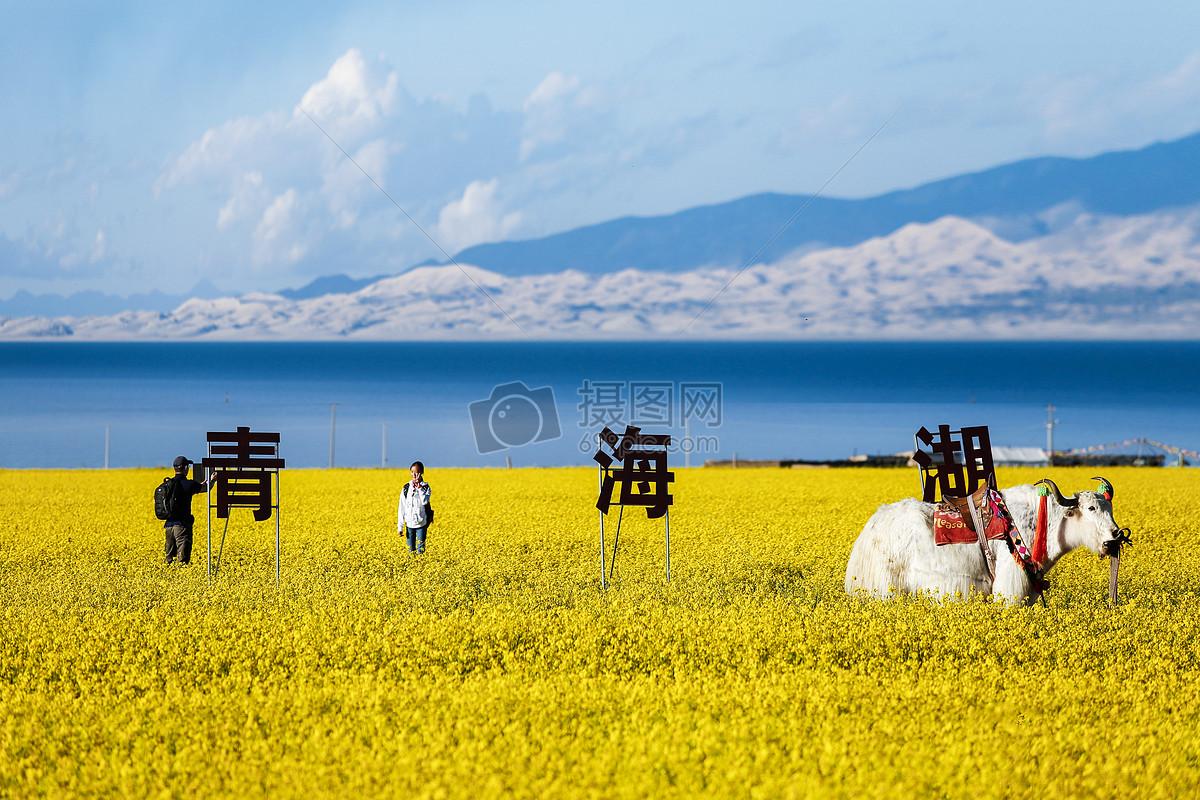 青海湖最著名的景点,哪里看油菜花最好,七月份去怎么安排