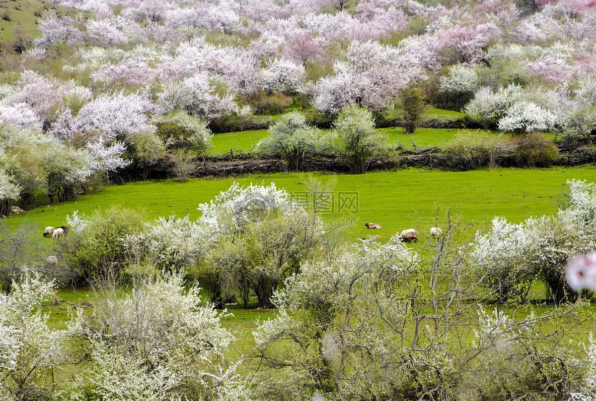 图片 照片 自然风景 新疆伊犁风光.