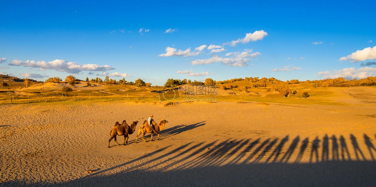 沙漠骆驼摄影图片免费下载_自然/风景图库大全_编号