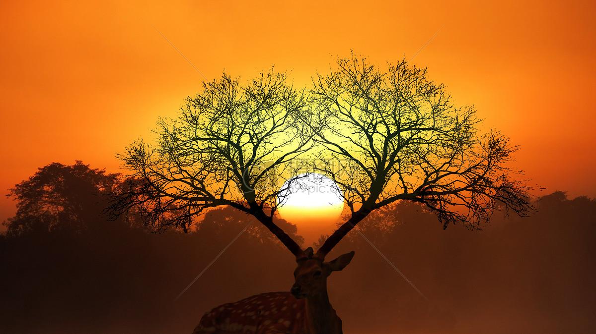 麋鹿森林图片素材_免费下载_jpg图片格式_vrf高清图片