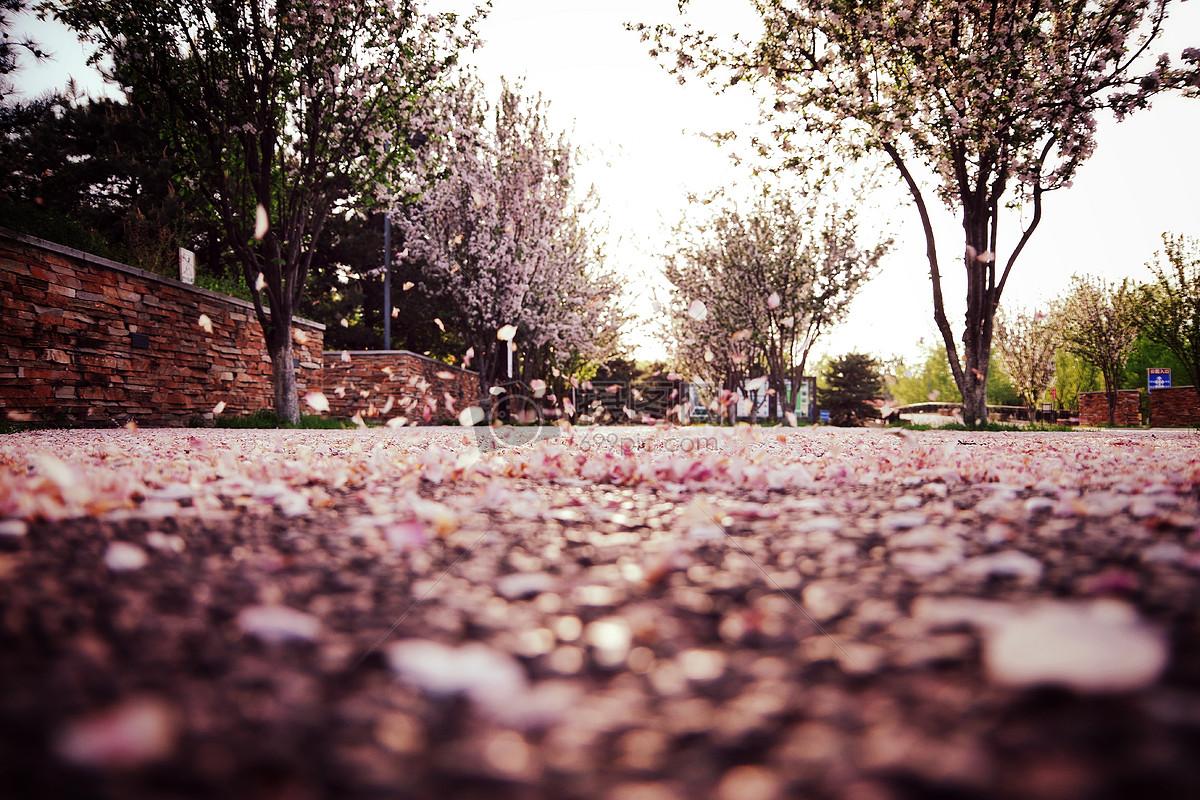 公园小径简笔画_地上的花草简笔画图片-花草简笔画图片/花草的简笔画/花草树木