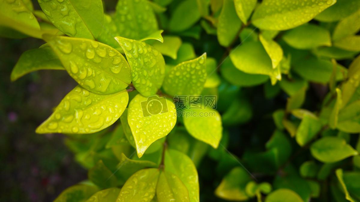 雨后摄影图片免费下载_自然/风景图库大全_编号-摄