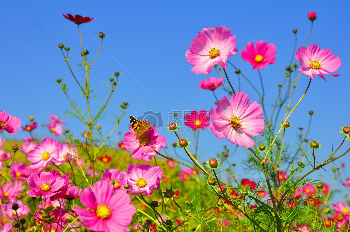 图片 照片 自然风景 蓝天下的花朵.jpg