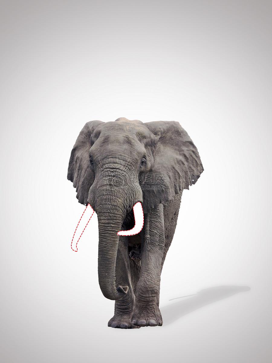 关爱动物图片素材_免费下载_jpg图片格式_vrf高清图片