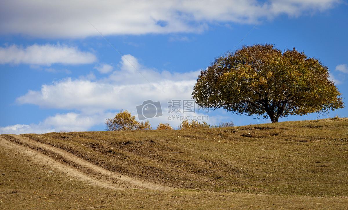 一棵树摄影图片免费下载_自然/风景图库大全_编号-摄