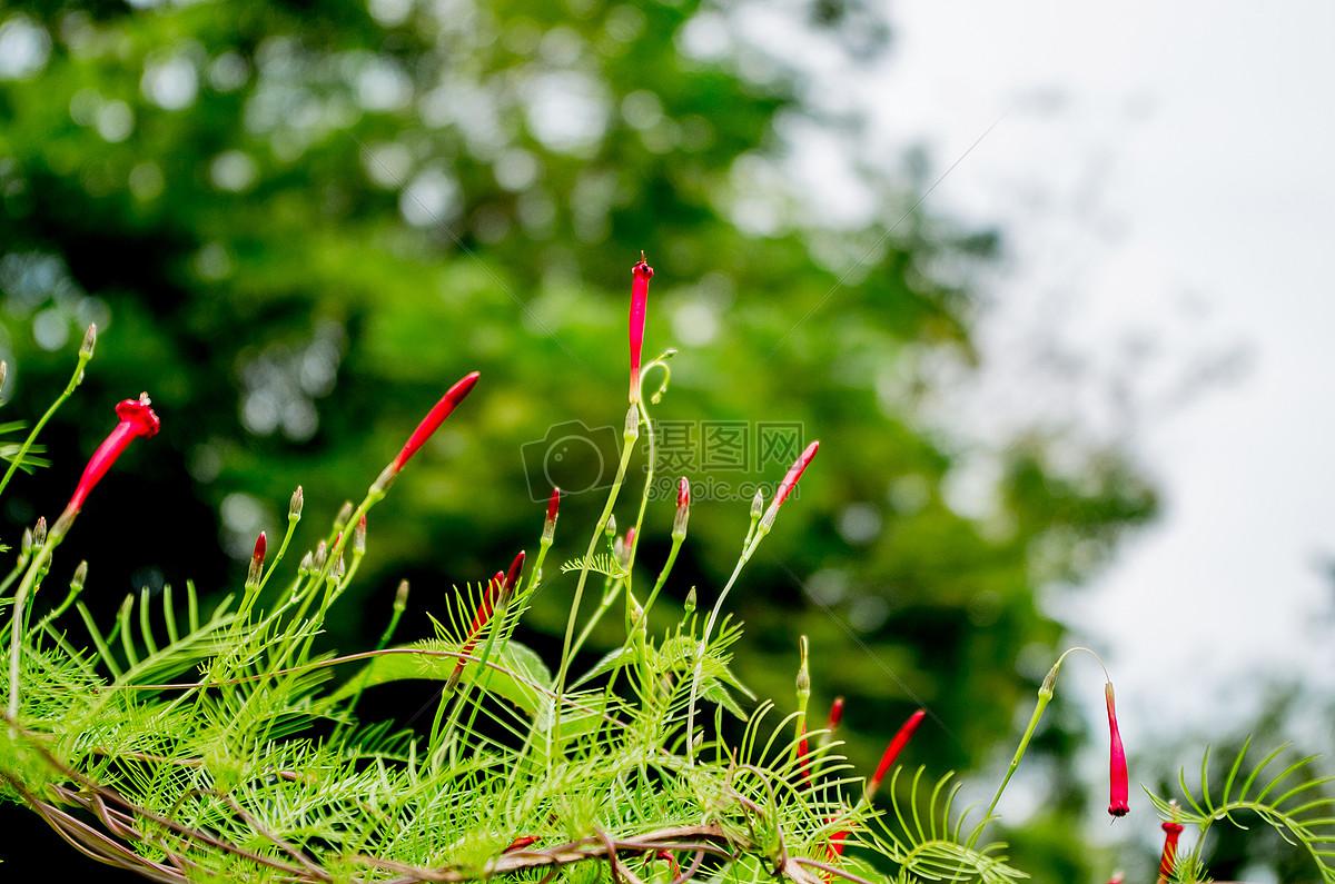 夏天的植物