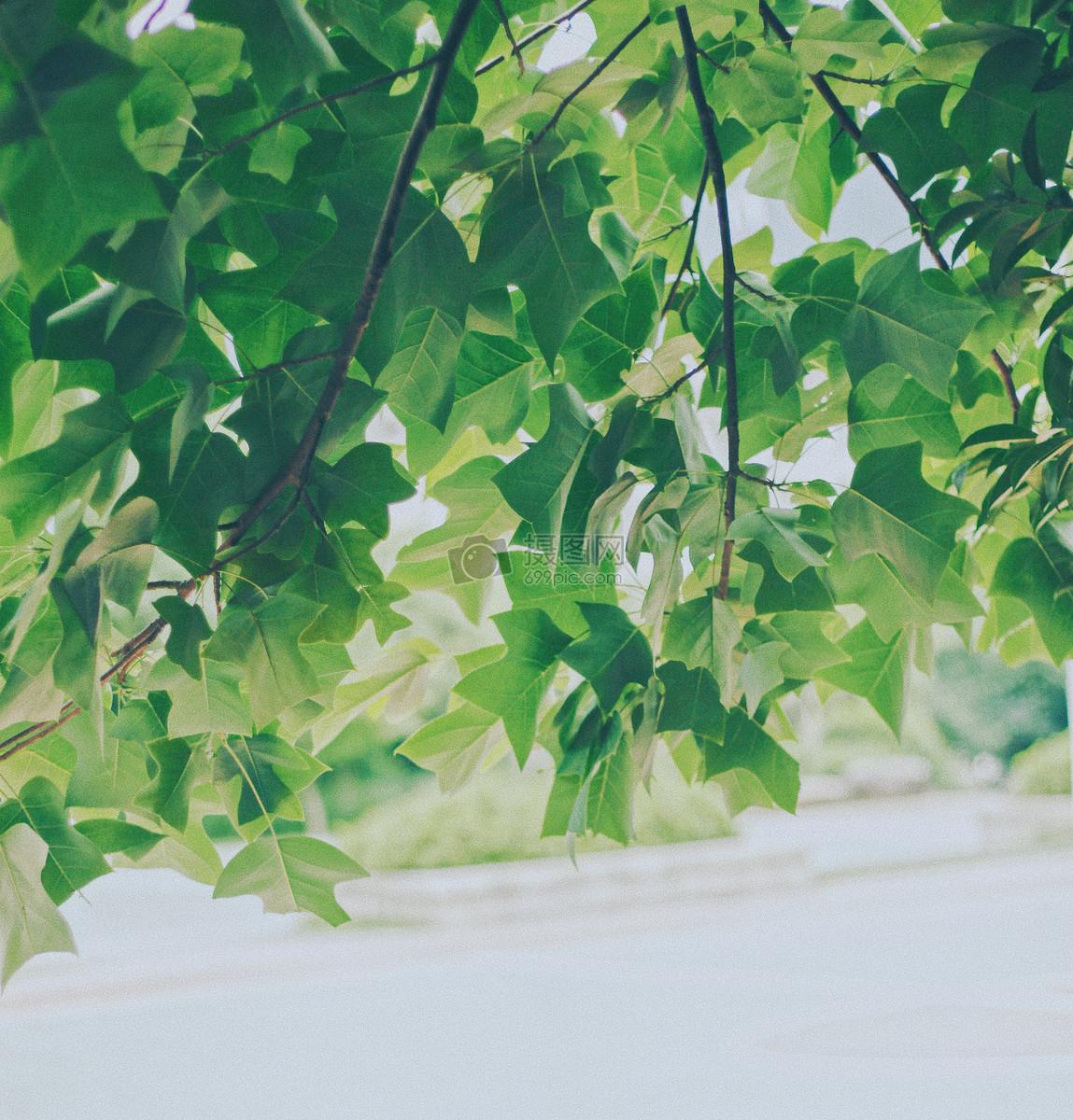唯美图片 自然风景 夏天,除了满眼的绿色,还有缤纷的色彩jpg  分享