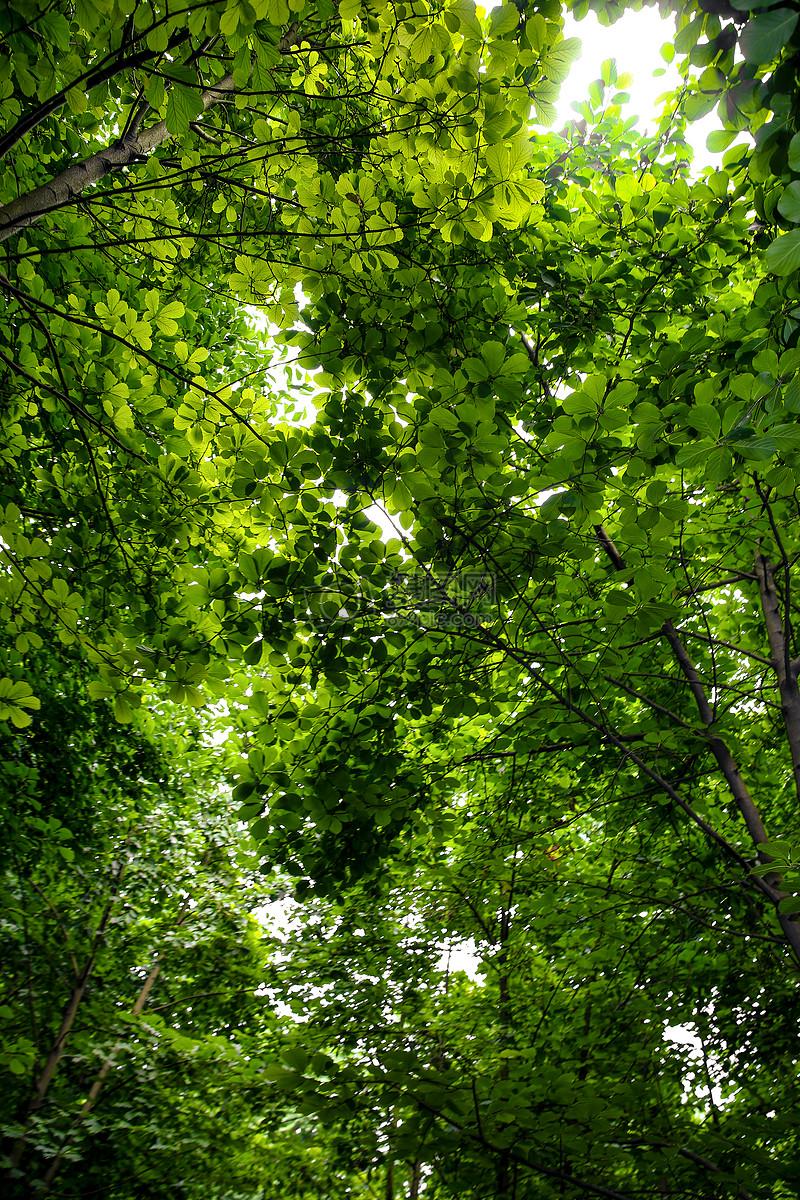 唯美图片 自然风景 阳光下的树叶jpg  分享: qq好友 微信朋友圈 qq