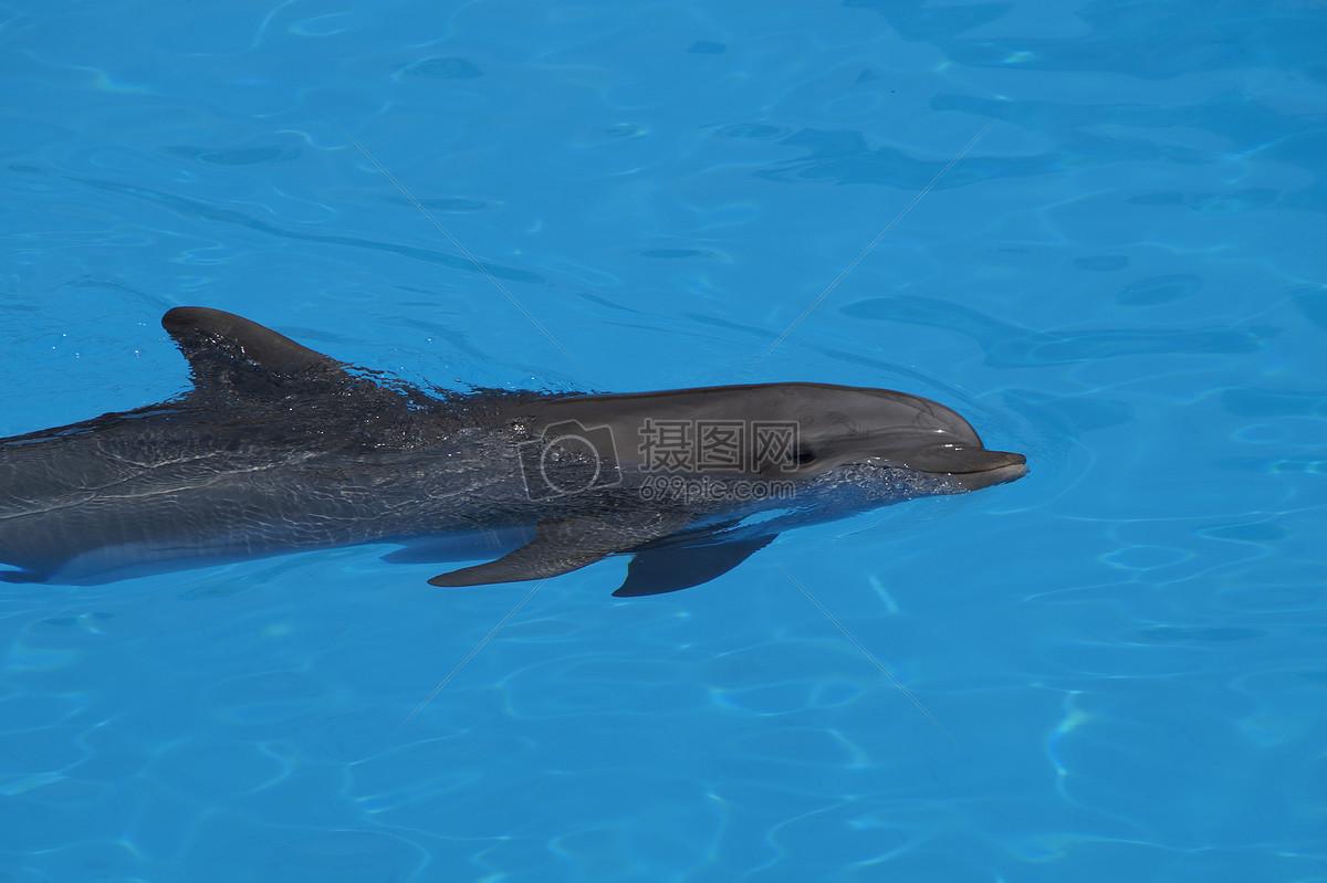海洋馆的海豚摄影图片免费下载_动物图库大全_编号-摄