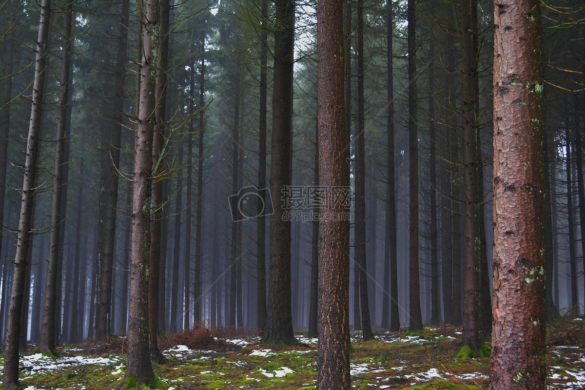 森林的树木摄影图片免费下载_自然/风景图库大全_编号