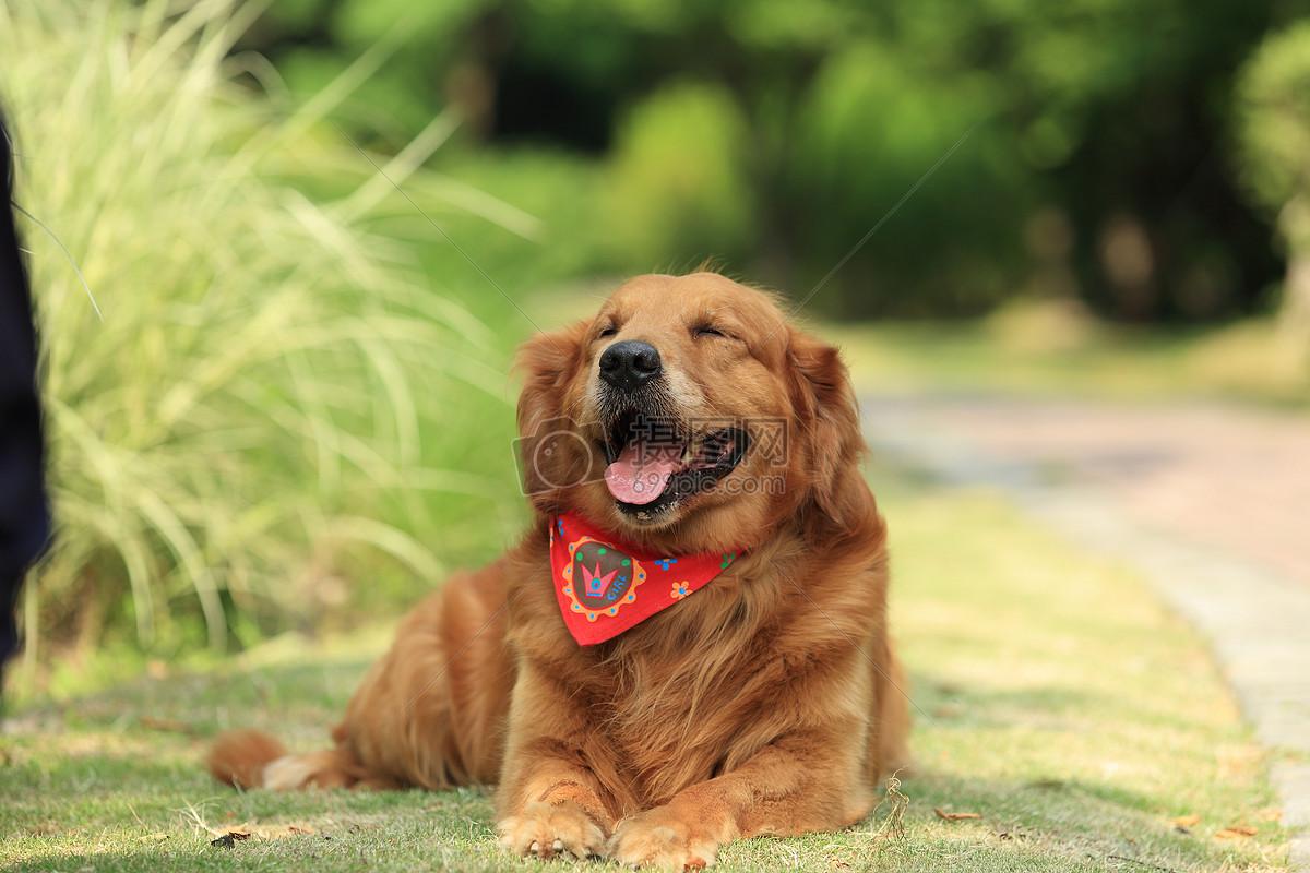 阳光下微笑的狗狗摄影图片免费下载_动物图库大全_-摄