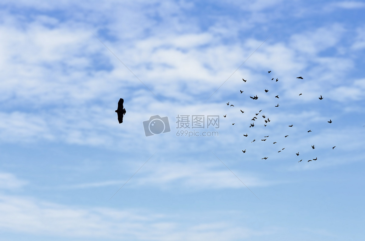 图片 照片 自然风景 蓝天白云上的飞鸟.jpg