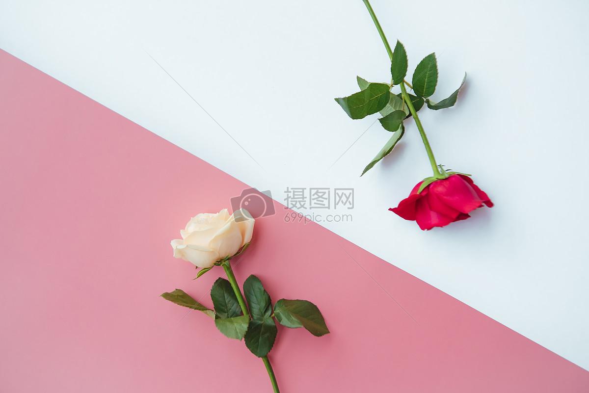 七夕玫瑰图片