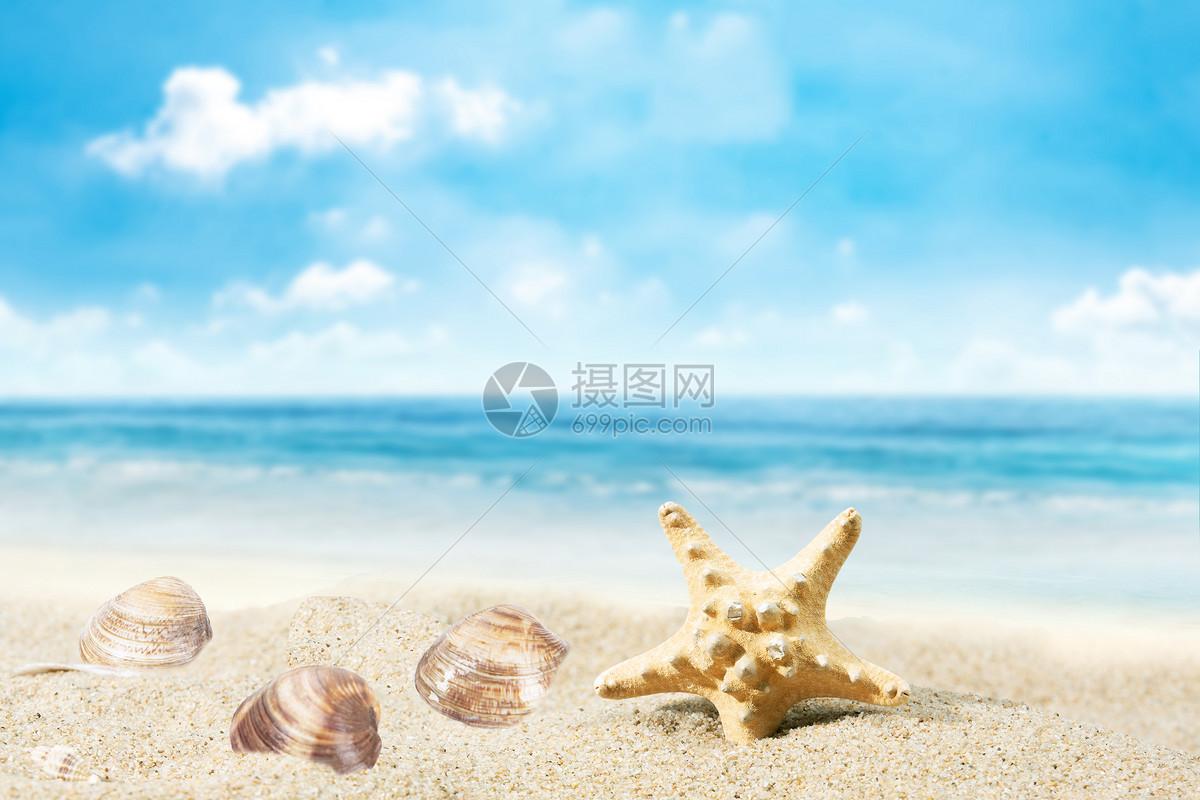 夏日海边贝壳景观