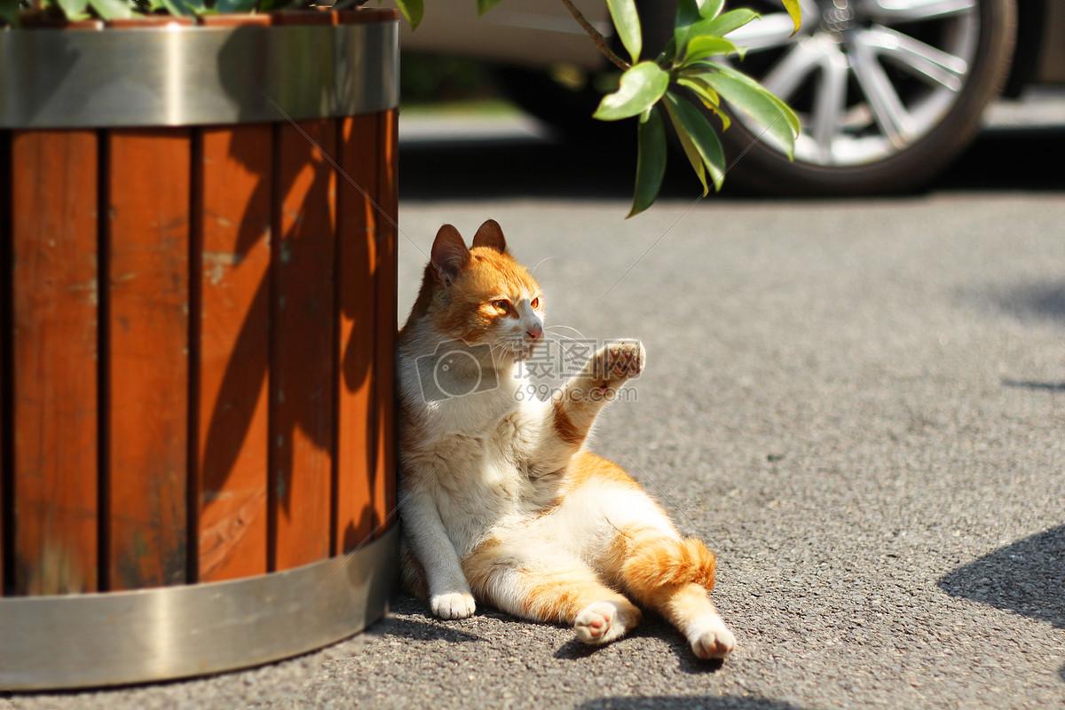 橘猫猫咪摄影图片免费下载_动物图库大全_编号-摄