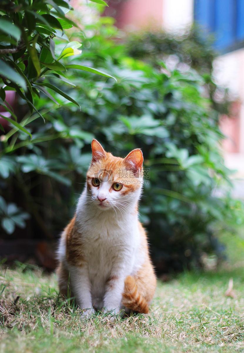 标签: 猫咪照片田园猫猫咪橘猫可爱动物橘猫猫咪图片橘猫猫咪图片