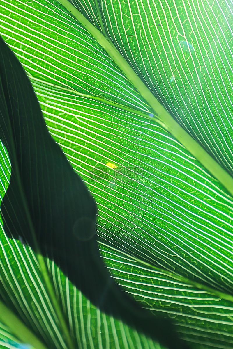 毕业季壁纸植物叶脉植物背景壁纸图片植物背景壁纸图片免费下载 版权