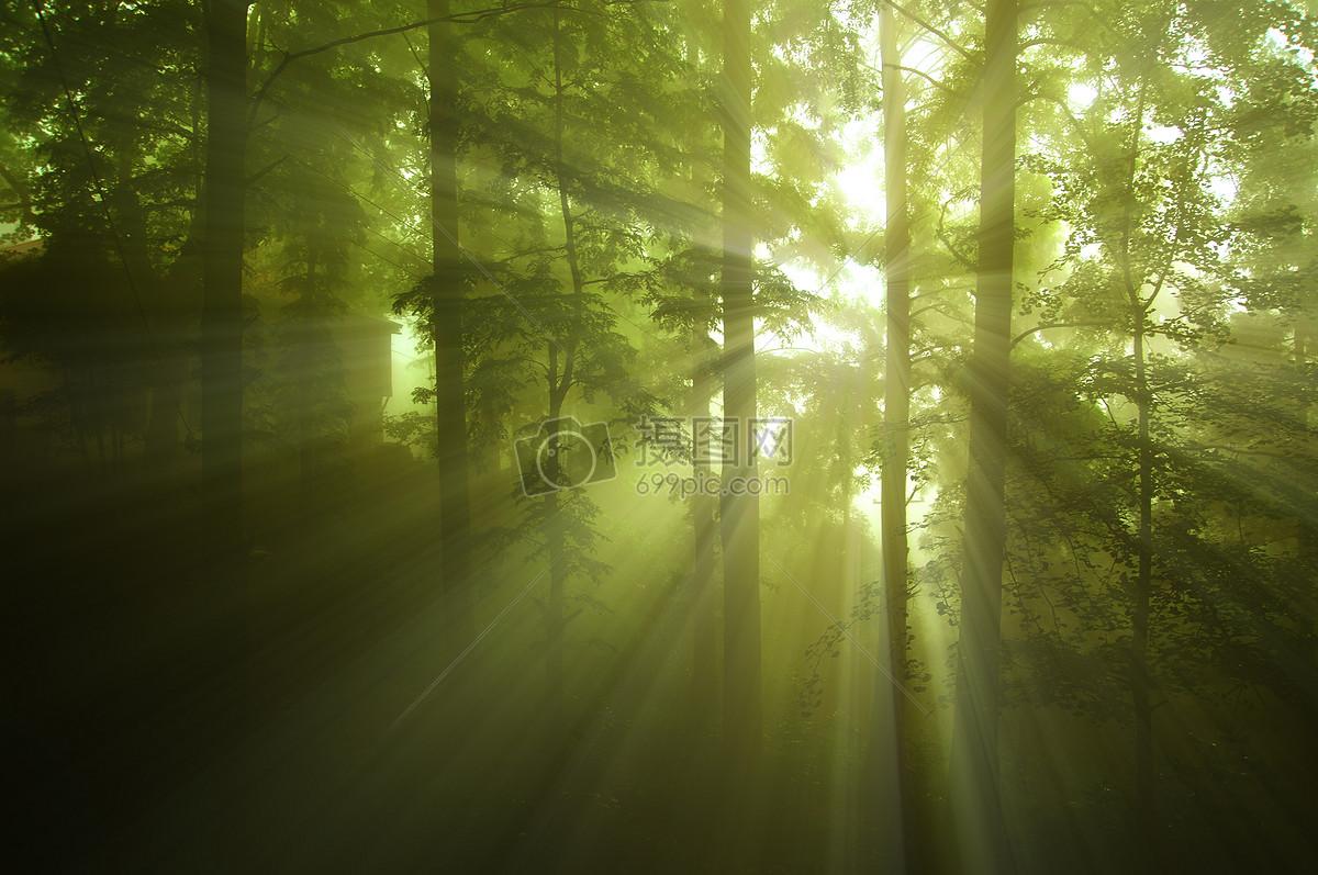图片 照片 自然风景 迷雾森林jpg